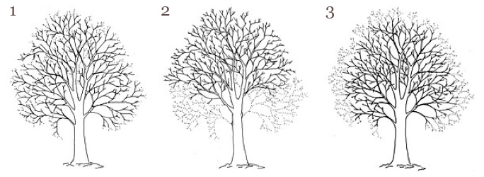 pruning definitions